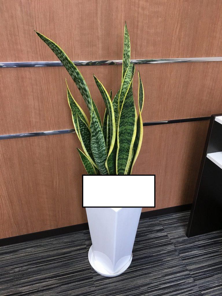 観葉植物:器・サイズセレクト