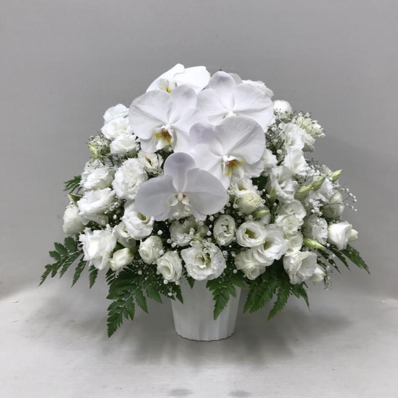 【御供】胡蝶蘭とトルコキキョウのアレンジメント_50_MS-OS