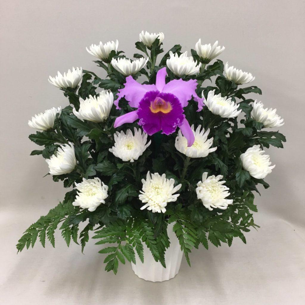 【御供】カトレアと菊のアレンジメントW_50_SP-OS