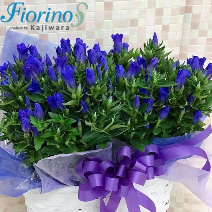 ギフト用季節の花鉢18544-0001